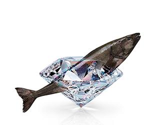 Black Cod Morue Charbonnière