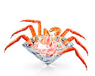 King Crab épaule
